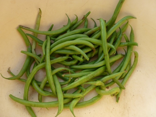 A few fresh dwarf green beans - a treat at the end of November