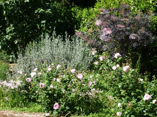 Triangular rose bed