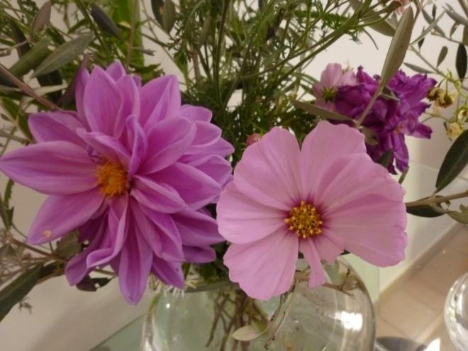 Cosmos Pink Sensation, Dahlia Magenta Star