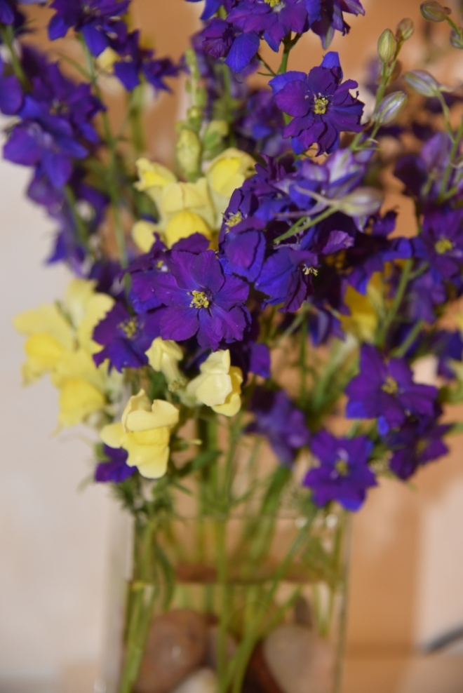 Blue Larkspur combined with yellow Antirrhinums