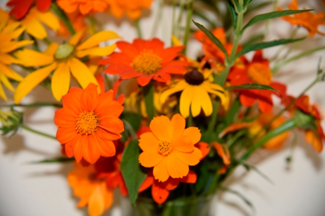 My first picking of Tithonia (sown on 2nd February with Cosmos Rudbeckia and Leonotis leonurus