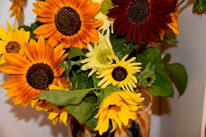 Several varieties of sunflowers look good together
